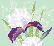 Bouquet of Irises on Light Green Background Stock Photo