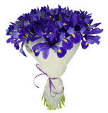 Bouquet of irises in package Royalty Free Stock Photo