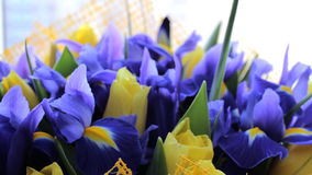 Bouquet of irises with tulips. Beautiful bouquet of irises with tulips stock video footage