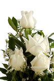 Bouquet of ivory roses Royalty Free Stock Photography