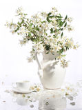 Bouquet of a jasmin and tea cup on a white background. Beautiful bouquet and cup stock photography