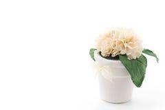 Bouquet jasmine Stock Image
