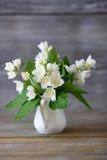 Bouquet of jasmine Royalty Free Stock Photos