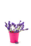 Bouquet Lavender Royalty Free Stock Images