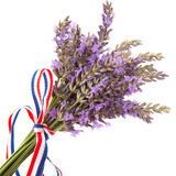 Bouquet Lavender Stock Photo