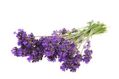 Bouquet Lavender Stock Photos