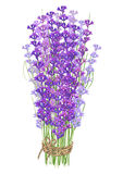 Bouquet of lavender Royalty Free Stock Photography