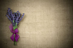 Bouquet of of lavender Royalty Free Stock Images