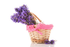 Bouquet Lavender in basket Royalty Free Stock Image