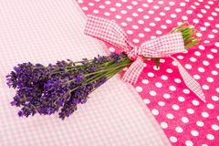 Bouquet Lavender on dotted background Royalty Free Stock Images