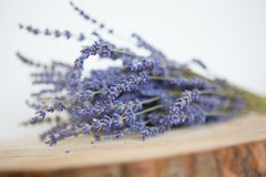 Bouquet of Lavender flowers royalty free stock photos