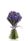 Bouquet of lavender flowers cut. On white background Royalty Free Stock Photos