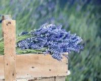 Bouquet of lavender flowers Stock Photo