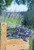 Bouquet of lavender flowers Stock Images