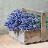 Bouquet of lavender flowers Royalty Free Stock Photography