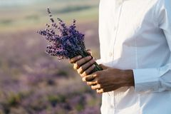 Bouquet of lavender in the hands of a man in white shirt. wedding concept stock image