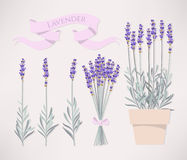 Bouquet of lavender Royalty Free Stock Photo