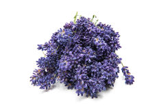 Bouquet of lavender isolated stock photo