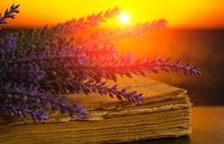 Bouquet of lavender lies on the old book on sunset. Background Stock Images