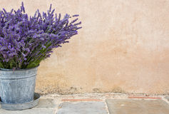 Bouquet of lavender in a metal bucket Stock Image