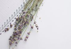 Bouquet of lavender on an open notebook, selective focus, the concept of collecting herbs and treatment of alternative medicine,. Top view royalty free stock photo