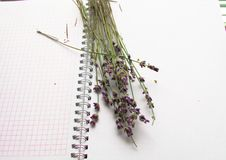 Bouquet of lavender on an open notebook, selective focus, the concept of collecting herbs and treatment of alternative medicine,. Top view stock photos