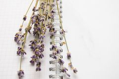 Bouquet of lavender on an open notebook, selective focus, the concept of collecting herbs and treatment of alternative medicine,. Top view royalty free stock photos