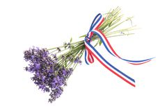 Bouquet Lavender on white background royalty free stock photography