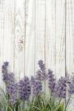 Bouquet lavender Stock Photography
