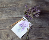 Bouquet of lavender Stock Photos