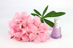 Bouquet of light pink flowers and violet Perfume bottles. Royalty Free Stock Photos