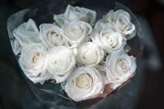 Bouquet of light roses on dark background in the morning sunlight royalty free stock photo