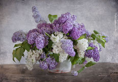 Bouquet of lilac Royalty Free Stock Photo