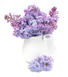 Bouquet of lilac Stock Image