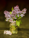 A bouquet of lilac Stock Image