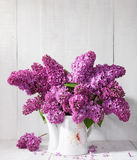 Bouquet of lilac  against a  wooden wall. Royalty Free Stock Photo