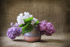 Bouquet of lilac colored in the clay vase against the background Stock Photography