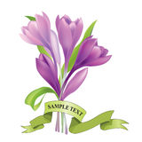 Bouquet of lilac crocus flowers Stock Photos