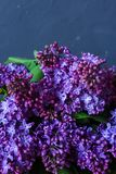 A bouquet of lilac on a dark background Stock Photos