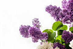 Bouquet of lilac flower Royalty Free Stock Photography