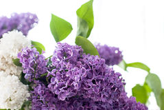 Bouquet of lilac flower Stock Images