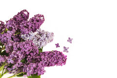 Bouquet of lilac flowers Royalty Free Stock Images