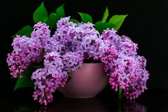 Bouquet of lilac flowers in a lilac vase on a black background stock images