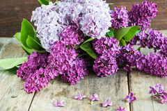 Bouquet of lilac flowers stock photo