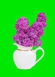 Bouquet of lilac flowers in a white jug isolated on a green Royalty Free Stock Photo