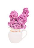 Bouquet of lilac flowers in a white jug isolated on white background Royalty Free Stock Image