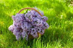 Bouquet of lilac on green grass Stock Images