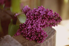 A bouquet of lilac , lilac flowers on wooden bacground. May Royalty Free Stock Photos