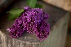 A bouquet of lilac , lilac flowers on wooden bacground. May Stock Images