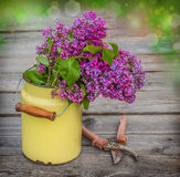 A bouquet of lilac in old milk can in drops of dew and garden pr Stock Images